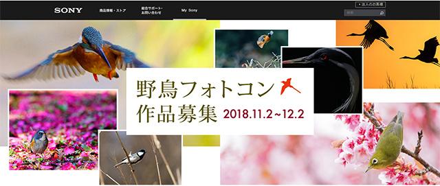 ソニー、撮影機材の制限のないオープンフォトコンを開催。野鳥フォトコンテスト作品募集。募集期間は、2018年11月2日(金)~12月2日(日)。