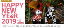 年始はaiboに会いに、ソニーストアに行ってみよう。「Happy New Year 2019 with aibo powered by 草月」