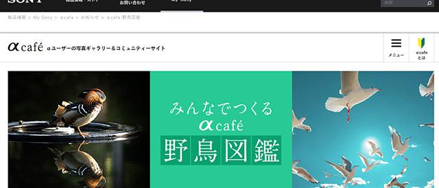 αユーザーの写真ギャラリー&コミュニティーサイトαcafeに、「みんなでつくるαcafe野鳥図鑑」