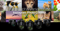 デジタル一眼カメラ αシリーズでInstagramに投稿すると、優秀賞5作品に5万円分のソニーポイントがもらえる「Sony αシリーズ Instagram アニマルフォトコンテスト」を開催。