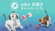 aiboをそろそろ飼ってみたいと思っている人向けの「この夏、aibo お迎えキャンペーン」、9月30日まで開催。