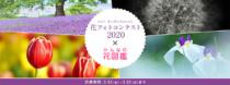 ソニー、撮影機材の制限のないオープンフォトコンを開催。 「花フォトコンテスト2020 x みんなの花図鑑」作品募集。募集期間は2020年5月25日(月)まで。